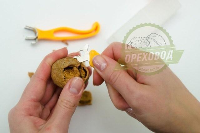 Базовая линия по переработке грецкого ореха - 13