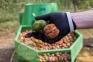 Промышленная мойка для очистки ореха от зеленой кожуры (1000 кг/ч) - 7
